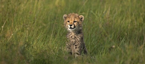 2022 African Safaris – Smart Travelers Planning Now