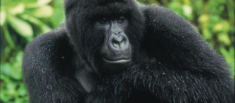 the-ape-escape
