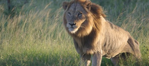 10+ Reasons to Choose Ultimate Africa Safaris