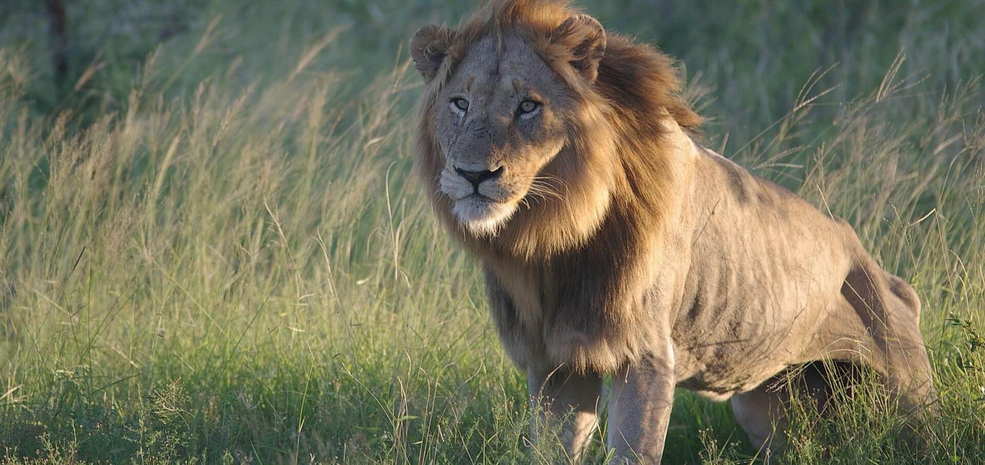 The Lion S Share 12 Days Luxury African Safari