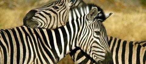 animal-attraction