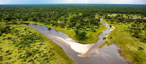 What a Year to Visit Botswana