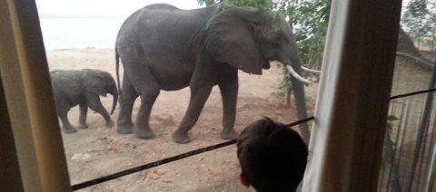 Ruckomechi Elephants