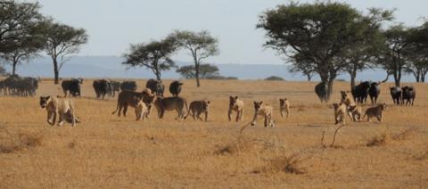 Singita Grumeti Reserve Tanzania
