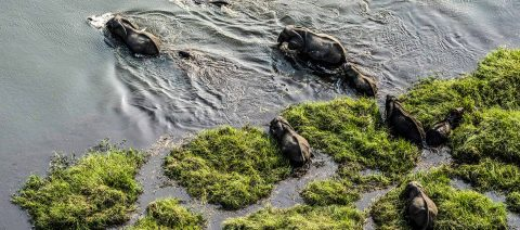 Great Year for the East African Wildebeest Migration
