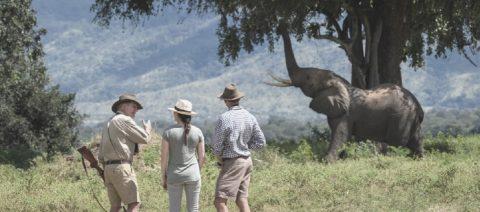 Free Safari Flights in Botswana – Yes you read it correctly.