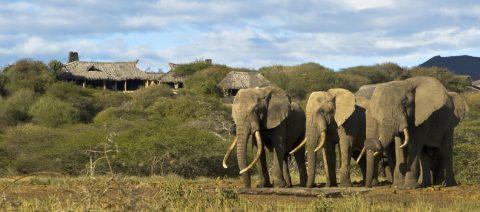 Super Cool Private Kenya Safari – November 2020